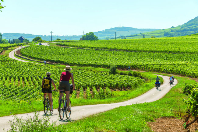 Cycling through the vineyards